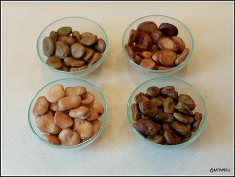 Broad Bean medley