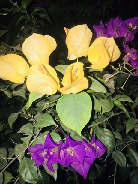 DAILY PHOTO: Yellow & Purple