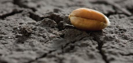The seed and soil of cancer – or why we need to zoom out to understand it