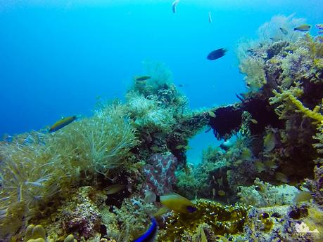 This reef is full of life
