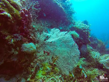 Bubble coral and sea fans