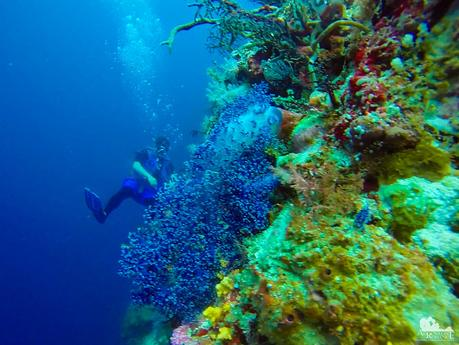 Soft and colorful Nephtheidae coral