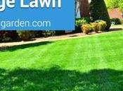 Tips Looking After Large Lawn