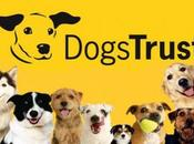 Dogs Trust Should Give This Worthy Cause