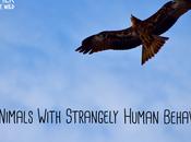 Animals with Strangely Human Behaviour