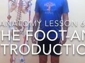 Video Week: Anatomy Feet