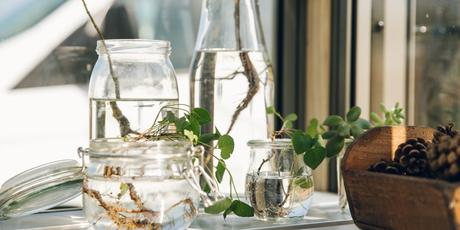 How much do the Best Luxury Greenhouses cost ?