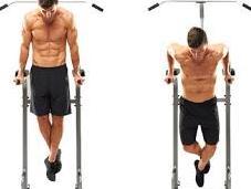 Pectoral Exercises Best Chest