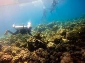 Dive Against Debris: Supporting Call Clean, Healthy Ocean