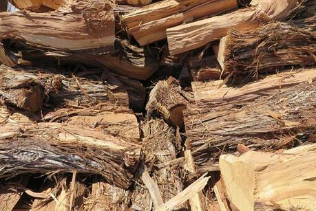 Types Of Firewood – A Simple Guide