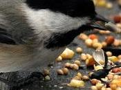 Bird Feeding Kind