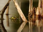 Amphibians, Chameleons, Cross Cultural Kids