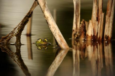 Amphibians, Chameleons, and Cross Cultural Kids