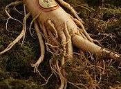 Magical Root Women Health Beauty Ginseng