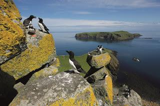 Brighter future for seabirds as Shiants declared rat free