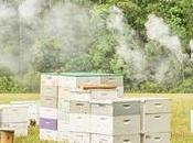Register Family Farm Freeport, Florida Bees Knees