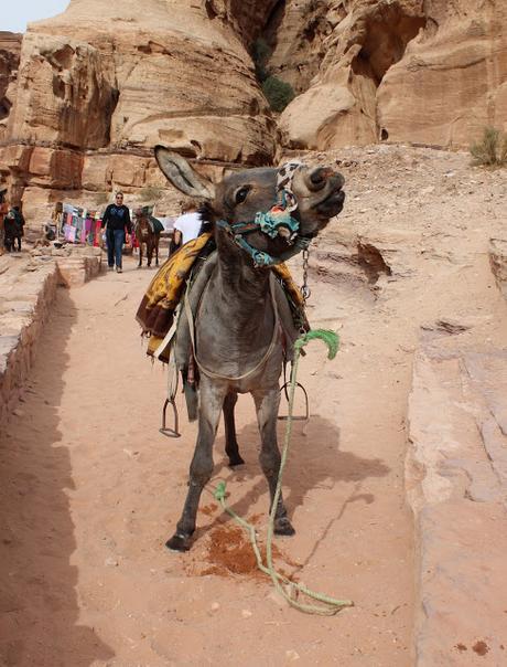 Rasoun, Jerash, Dead sea, Wadi Rum & Petra, Jordan
