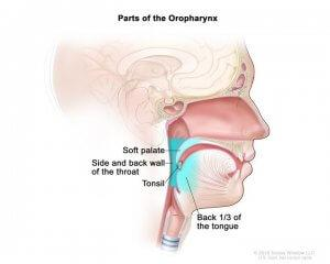 The Danger Of Dysphagia
