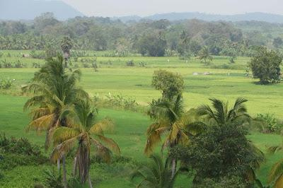 Sri Lanka: Pearl of the Indian Ocean, Part I, Guest Post by Gretchen Woelfle