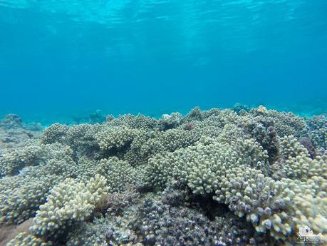 Digyo Island Marine Sanctuary