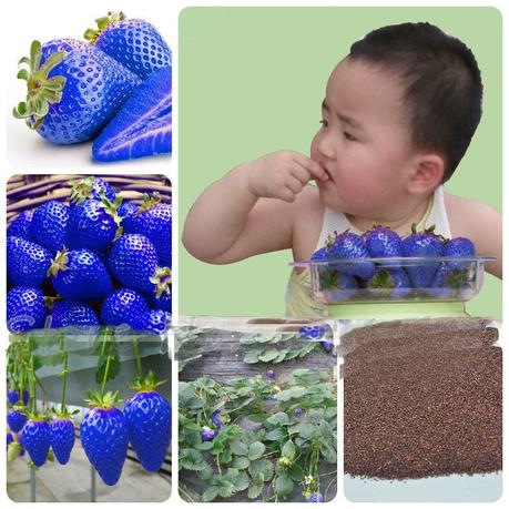 Newchic blue strawberry seeds