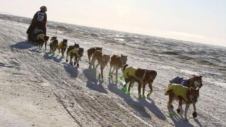 Iditarod 2018: Joar Ulsom First to Nome!