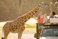What's New for Spring and Summer Travel at Busch Gardens