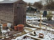 Allotment Snooping Snow