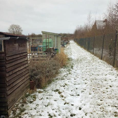 Allotment Snooping In The Snow