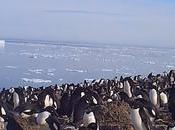 Video: Explore Massive Penguin Mega-Colony Antarctic