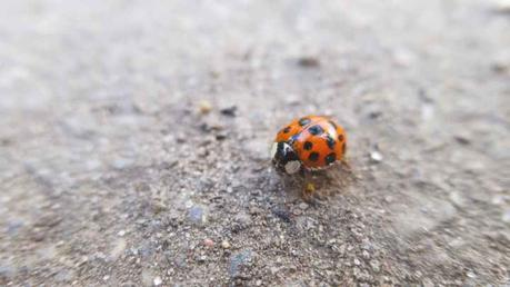 The Completed Draft of A Short Story: Sophie's Ladybug