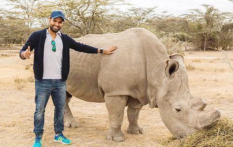 death of Sudan ~ curtains for  northern white rhinoceros  (Ceratotherium simum cottoni)