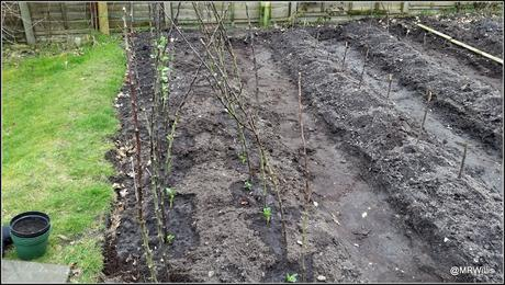 My Courtmoor plot at the end of March