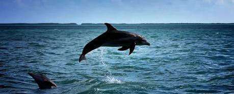 Image result for wild dolphin