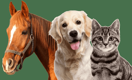 Image result for cat and horse pictures