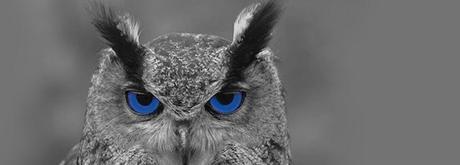 Image result for Owls