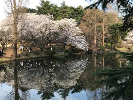 Shinjuku Gyoen Lake