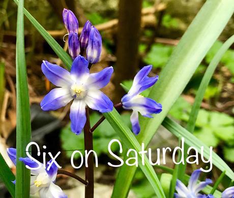 Six on Saturday – 7th April 2018