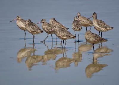 BIRDS, BEACH AND SUN: A Spring Weekend in La Jolla, CA