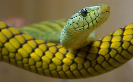 Quality of WHO guidelines on snakebite: the neglect continues