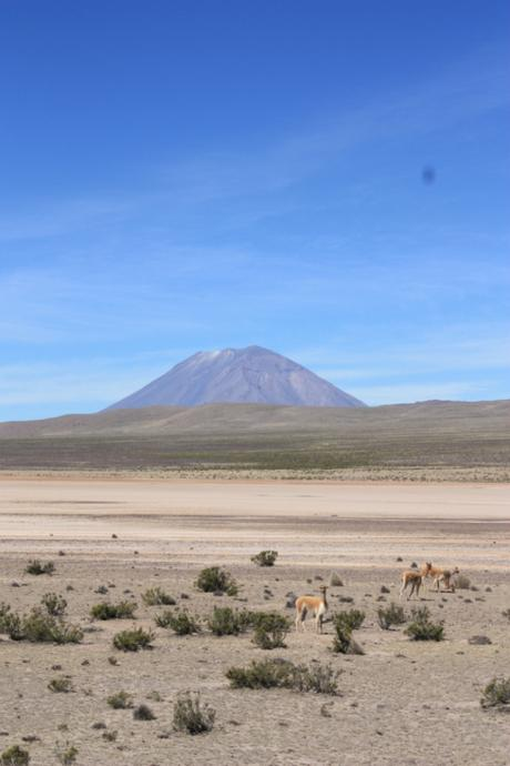 DAILY PHOTO: Scene from the Central Volcanic Zone