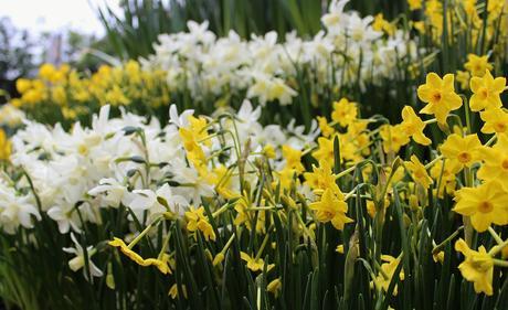 Ascot Spring Garden Show