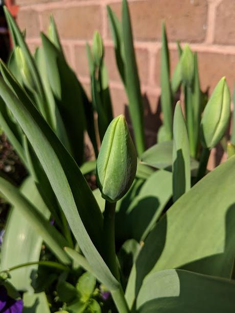 Spring Tour of my Garden - Six on Saturday April 2018