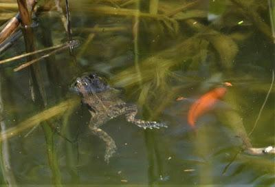 Toadally Toads