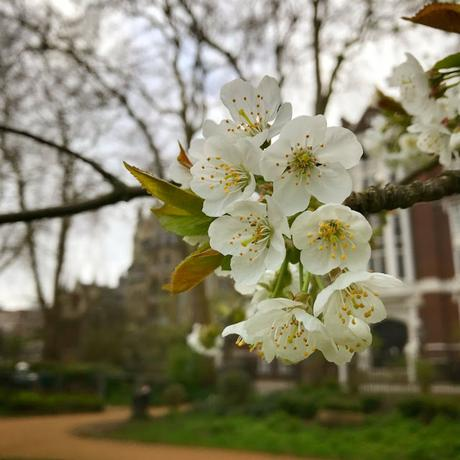 In & Around #London #Photoblog… Gordon Square, Bloomsbury - First Signs Of Spring