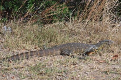 DAILY PHOTO: Creatures of Victoria Falls National Park