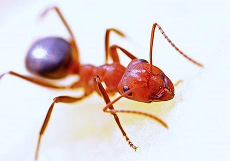 4 Ways to Eliminate Pests in Your Home