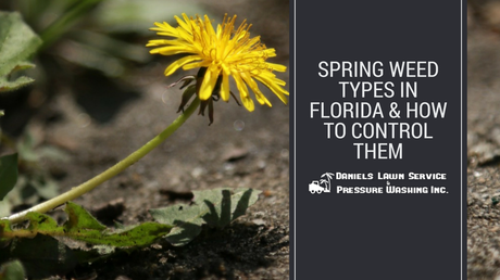 Weed Killer, Weed Control, Florida Weed Control, Florida Landscaping, Florida Yards, Yard of the Month