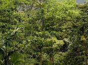 Dream Wedding Green Costa Rica