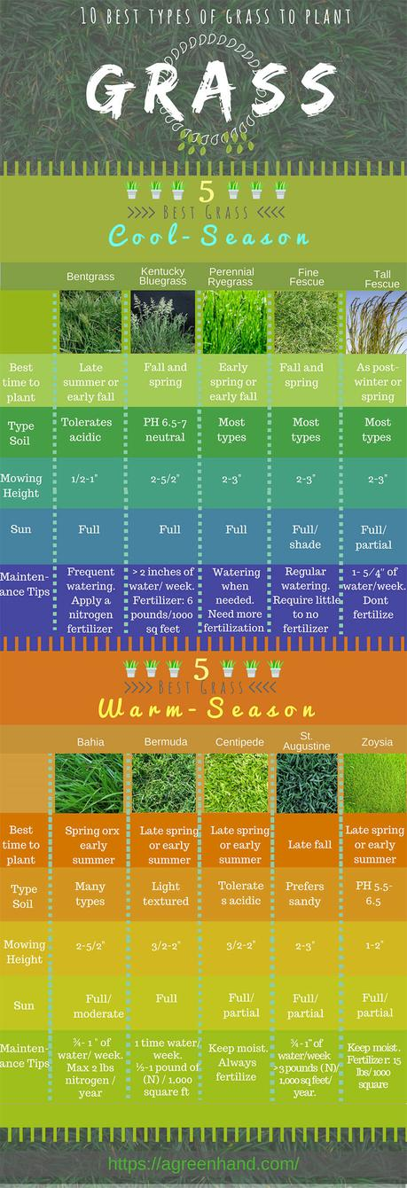 grass infographic